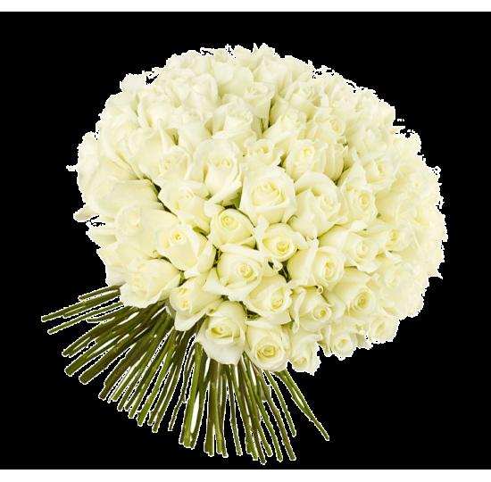 101 белая роза (импорт)