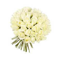 51 белая роза (импорт)
