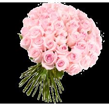 51 розовая роза (импорт)