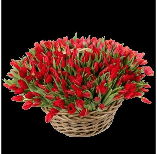 """""""151 красный тюльпан"""""""