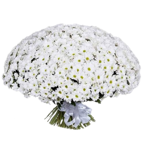 101 белая хризантема (2)