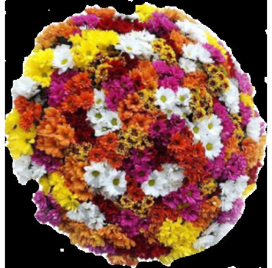 101 хризантема радуга