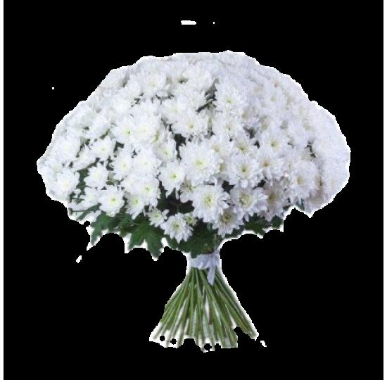 25 белых хризантем(2)