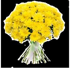 25 жёлтых хризантем
