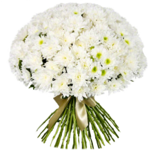 51 белая хризантема (2)