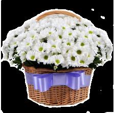 51 хризантема в корзине