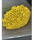 51 жёлтая хризантема