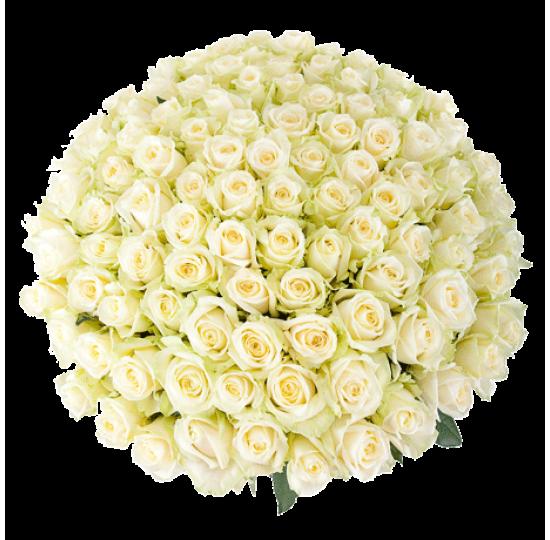 151 Белая роза