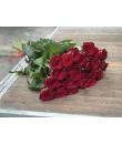 25 метровых красных роз
