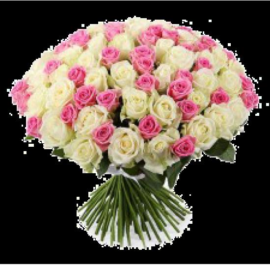 101 белая и розовая роза