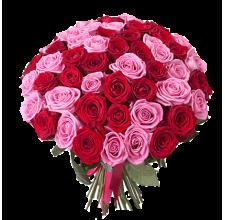51 красно - розовая роза