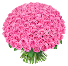 151 Розовая роза