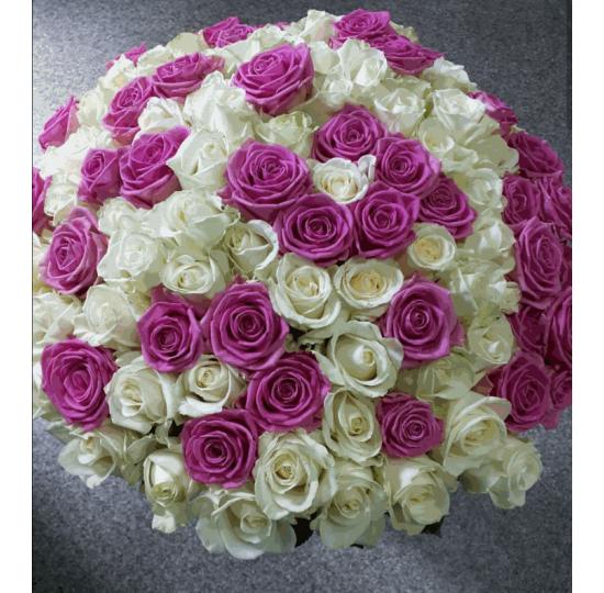 101 бело-розовая роза