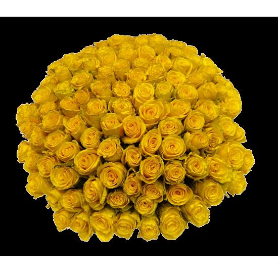 151 жёлтая роза