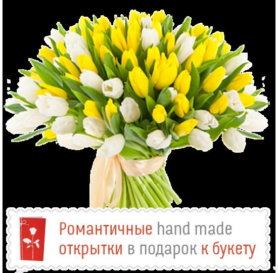 51 бело-жёлтый тюльпан