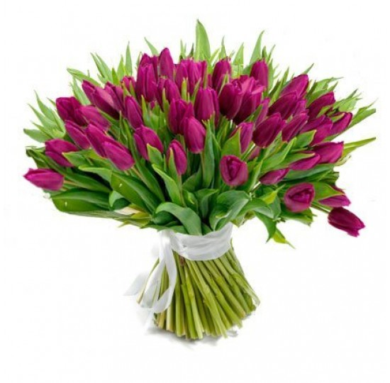 101 темно-фиолетовый тюльпан