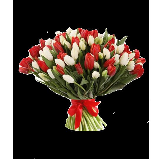 101 бело-красный тюльпан