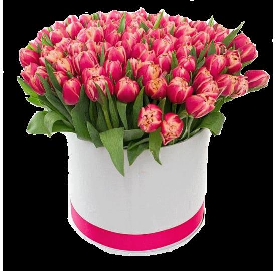 101 пионовидный тюльпан в шляпной коробке