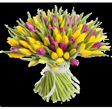 51 фиолетово-жёлтый тюльпан