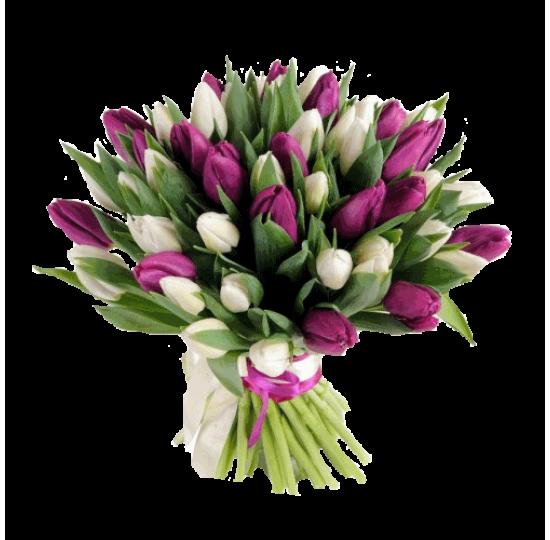 51 бело-фиолетовый тюльпан