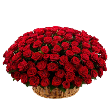 """ Корзина 151 красная роза"""